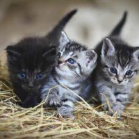 Kittens Alfie